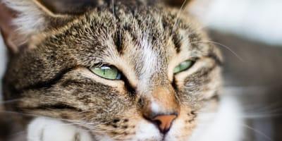 La memoria que tienen los gatos