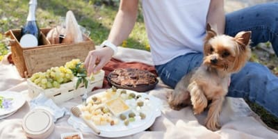 Picnic scene with small dog