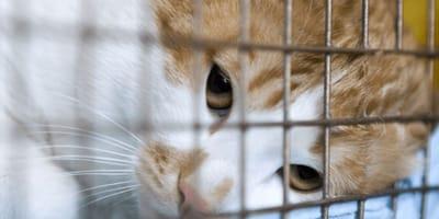 gatto-in-gabbia