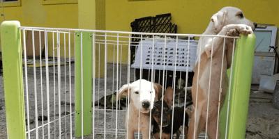 Cuccioli nel rifugio