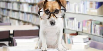 Colegio para perros