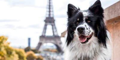 Vom Atlantik in die Alpen: Frankreich mit dem Hund genießen
