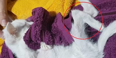 familia adoptante gatita ecuador maltrato animal