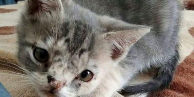 Mała kotka.