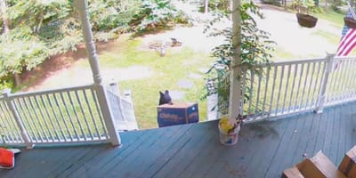 Four-legged thief steals from family