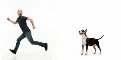 Angst vor Hunden? Was dahinter steckt und wie Sie sie loswerden
