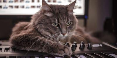 Katze hört Musik