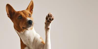 Łapa psa: jaka jest jej budowa? Jak dbać o psie łapy?