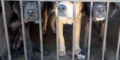Stop alle sperimentazioni su cani e gatti: l'annuncio dell'EPA