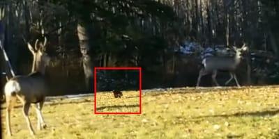 gato y dos ciervos
