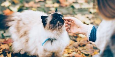 donna accarezza un gatto con collare