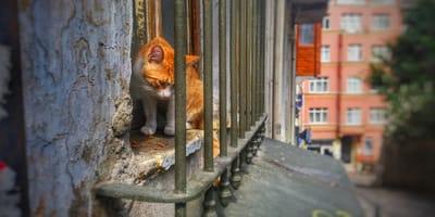 gatto-guarda-fuori-la-finestra