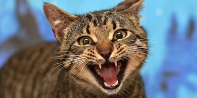 Alarmstufe rot: Wenn die Katze faucht