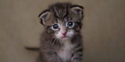Fremdes Kätzchen pinkelt in seinen Garten: Mann tut das Unfassbare!