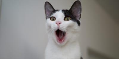 10 cosas que asustan a los gatos (por curiosas que parezcan)