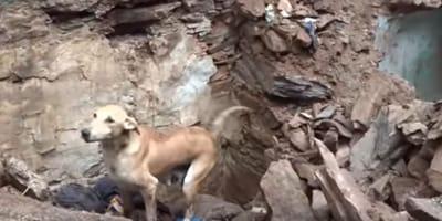 To, co zrobiła ta psia mama, by uratować własne młode jest niewiarygodne! (VIDEO)
