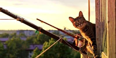 Mount Barker: coprifuoco e telecamere segrete per sorvegliare i felini