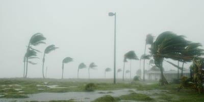 Uniti contro l'uragano Dorian: un miliardario presta il suo aiuto