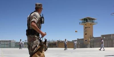 Il destino dei cani anti-bomba degli USA in Medioriente