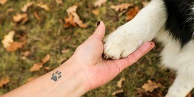 Hundepfoto als Tattoo