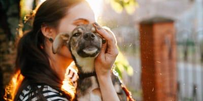 Adoptowany pies: jak mu pomóc w adaptacji w nowym domu?