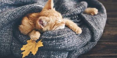 Gatos en otoño: cómo les afecta, cuidados básicos y muda de pelo