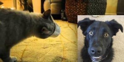 video perro rescata gato vaso cabeza