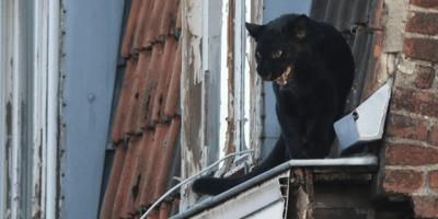 La pantera sul tetto