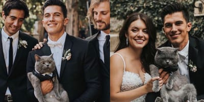 cat with humans on wedding