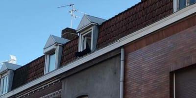 Pantera na dachu.