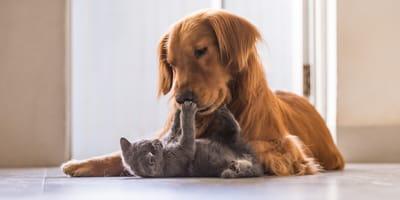 adoptar perro o gato