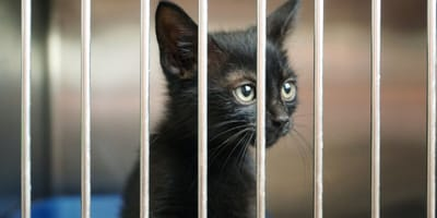 Kitten in a shelter cage
