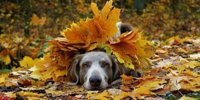 I 5 migliori video di cani che giocano con le foglie d'autunno