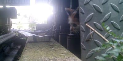 Die Überwachungskamera zeigt die Katze