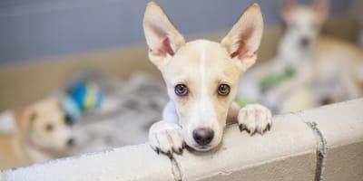 adoptar perro cosas que debes saber