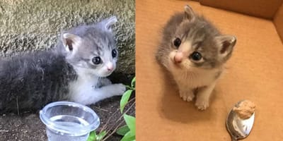 Woman rescues tiny stray kitten: Is in disbelief at what the vet says