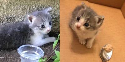 Little kitten in an alleyway and in a box