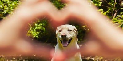 dog lovers day ideas celebrarlo