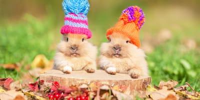 Conejos bonitos