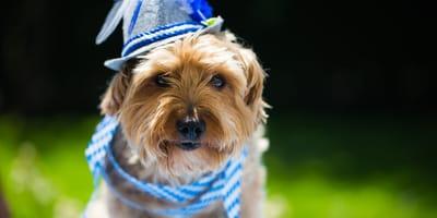 Hundesteuer in Bayern
