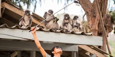 peligro animales salvajes selfie