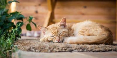 gatos primeros dias en casa