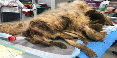 Tierärzte bekommen Monster auf OP-Tisch. 5 Stunden später strahlen ihre Augen!