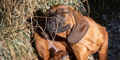 Uważaj: Twój pies może mieć alergię na bardzo zaskakujące rzeczy!