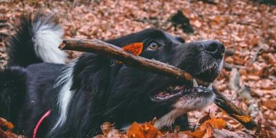 Jesień + pies = zabawa w liściach! Top 5 video psów, które kochają jesień!