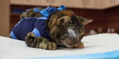 Kotka Toffi po operacji.