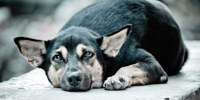 Einen Hund aus Rumänien adoptieren  –  Fakten und Tipps