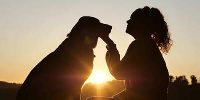 Come capire se il cane ti ha scelto come padrone?