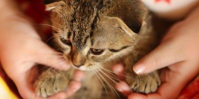 Un bebe gato con su dueño