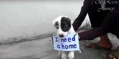 La storia del cane che gira con un cartello intorno al collo (Video)